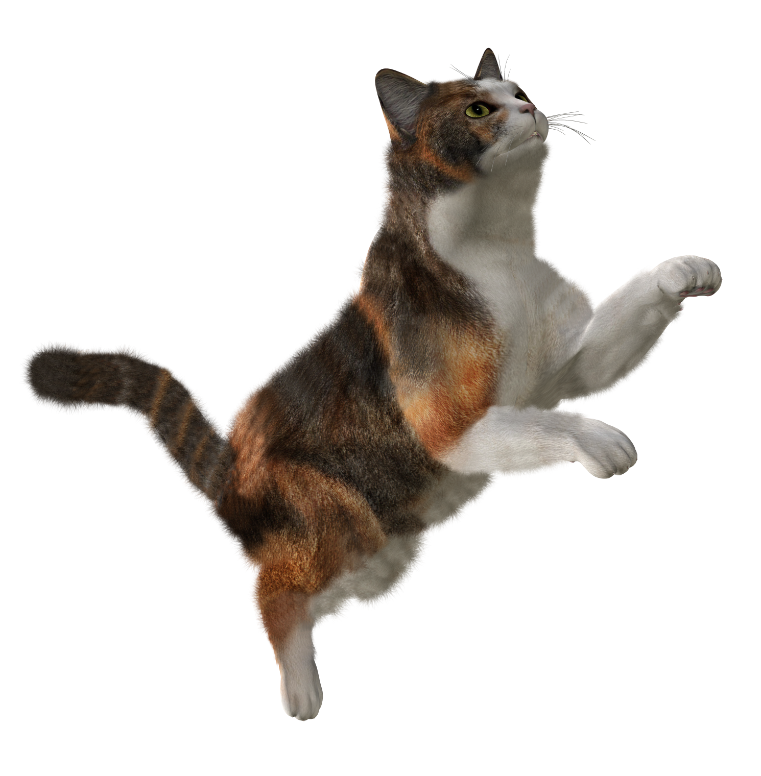 Kittens clipart one cat. Forty isolated stock photo
