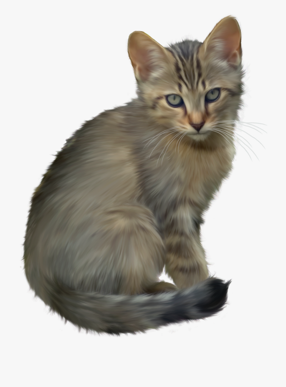 Kitten clipart pretty cat. Cute png free