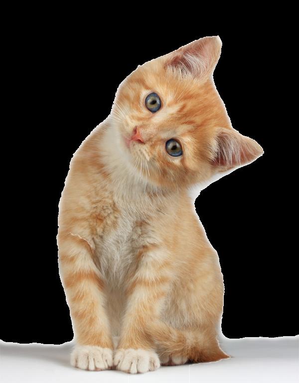 Kitten clipart six. Download hd wallpaper for