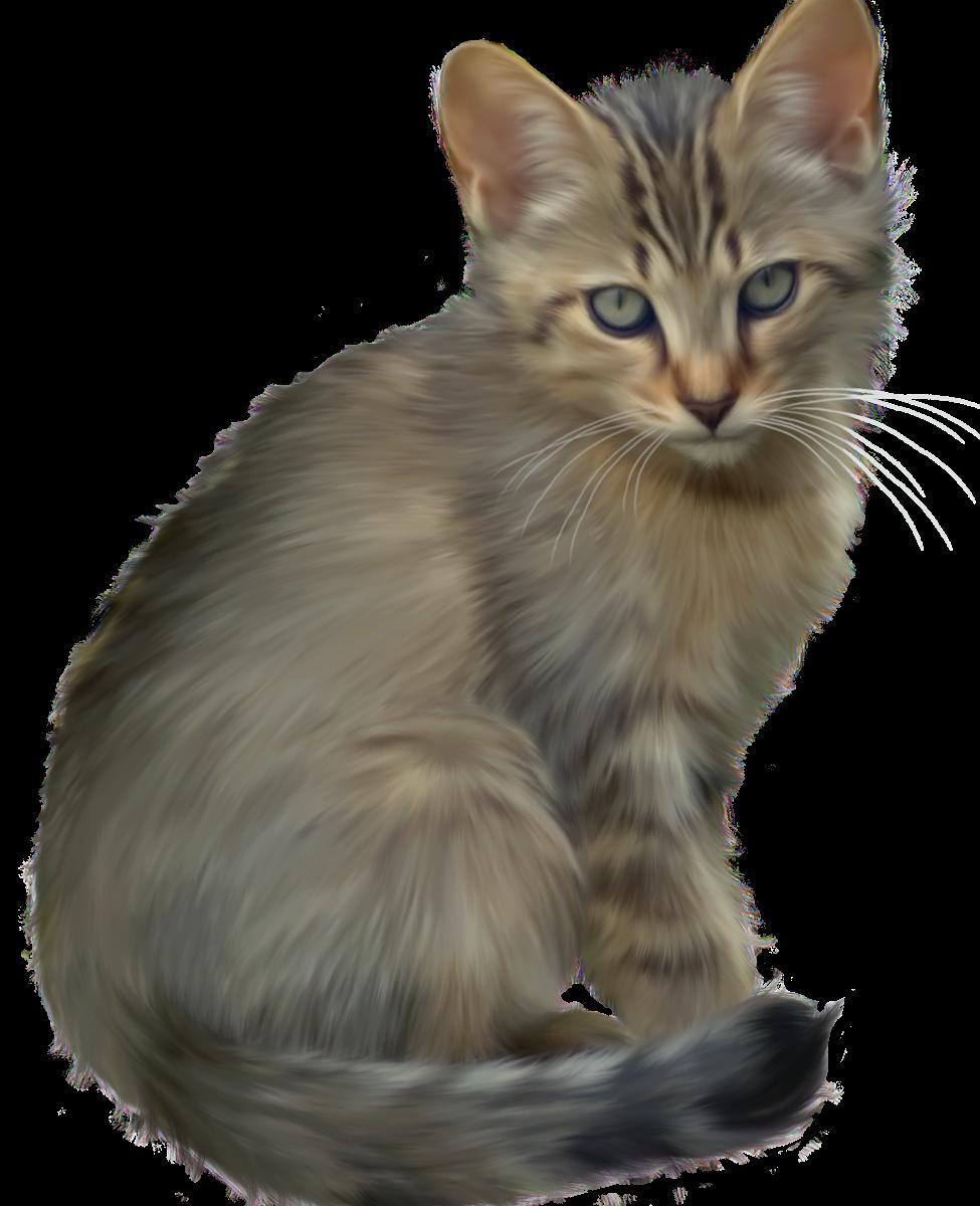 Download hd wallpaper for. Kitten clipart six