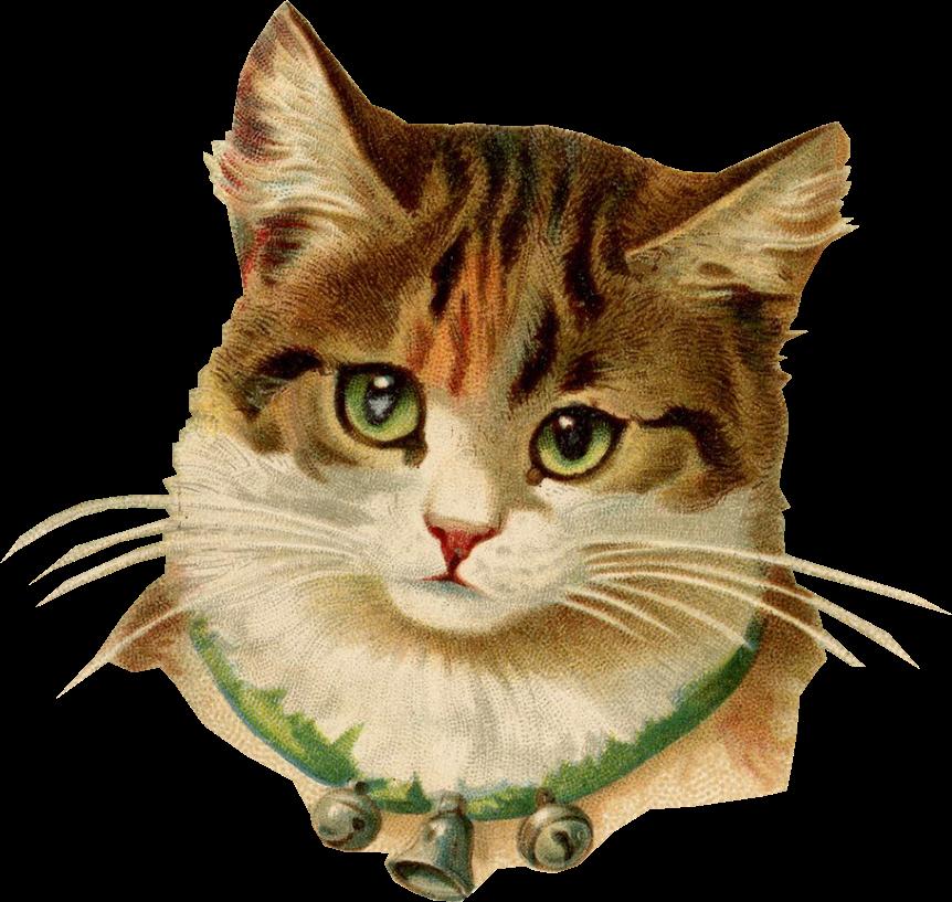 Kitten clipart striped cat. More www chomikuj pl