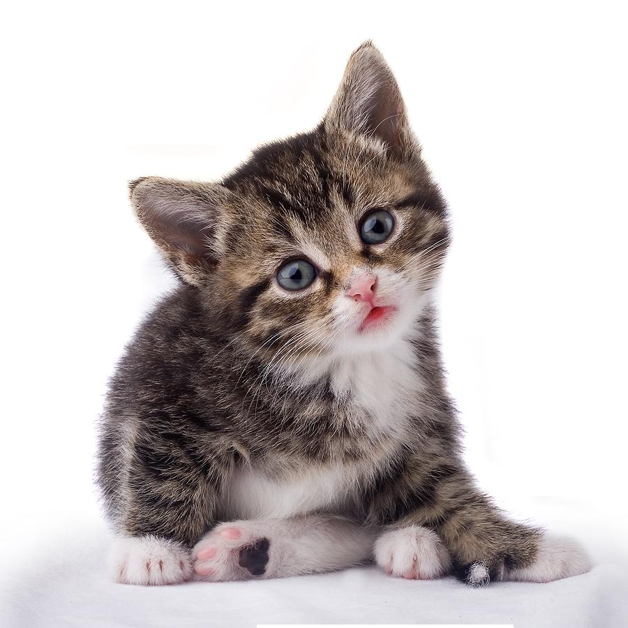 Twenty isolated stock photo. Kitten clipart three cat