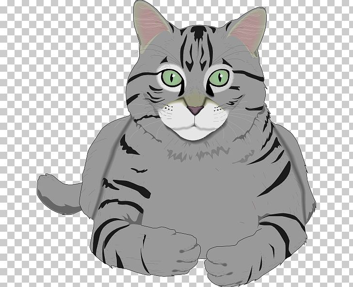 Kitten png american wirehair. Kittens clipart tiger cat