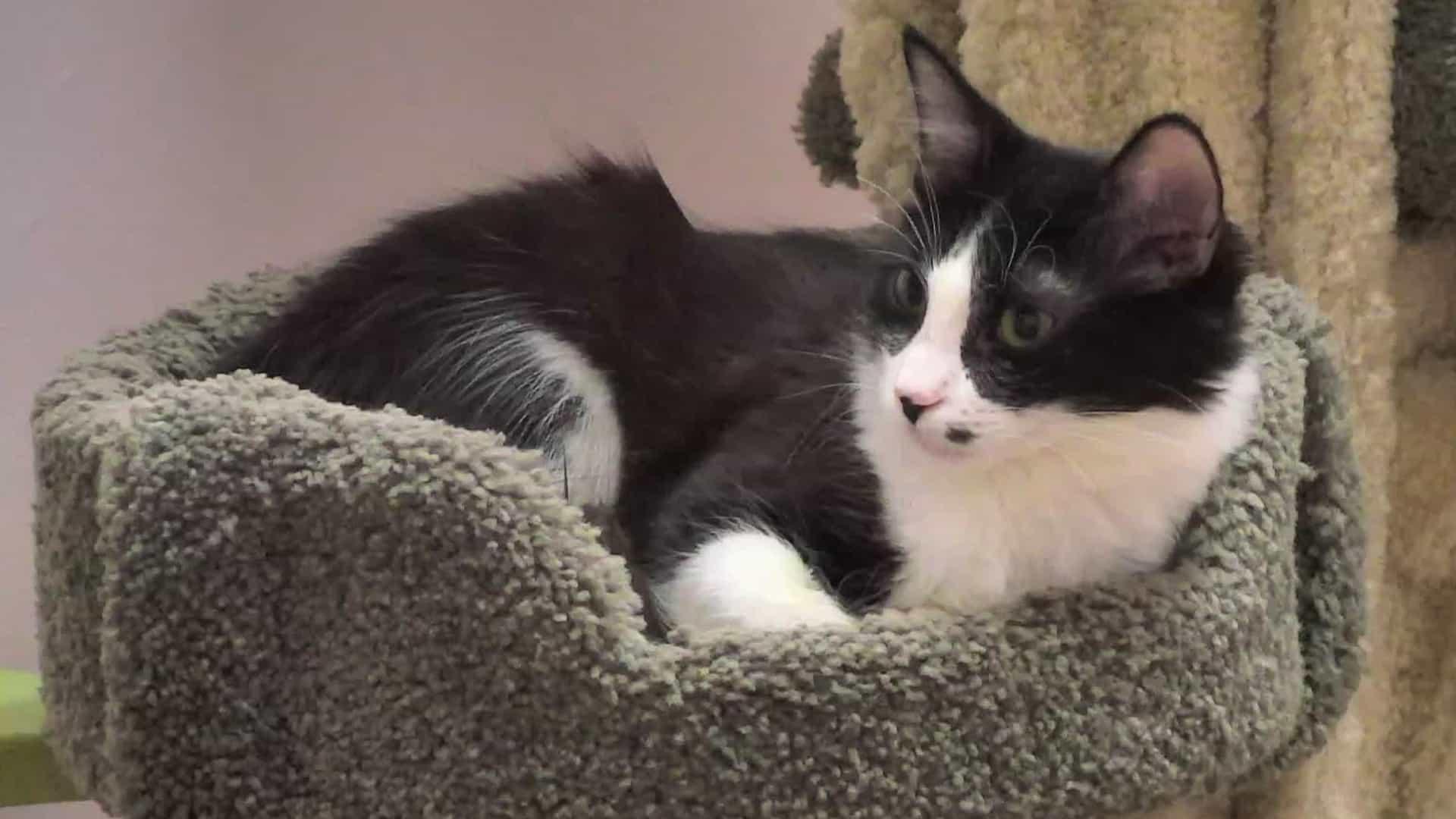 Kitten rescue cam live. Kittens clipart cate