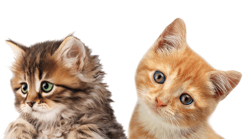 Kittens clipart cate. Cats png free images