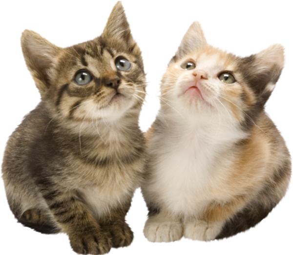 Kittens clipart five. Chatons chats cat gato