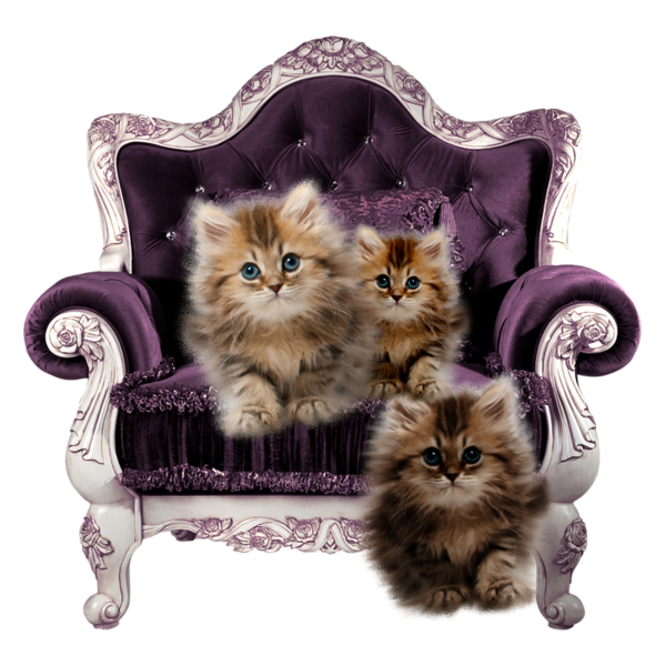Kittens clipart mother cat. Chatons chats gato katze
