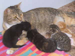 Kittens clipart mother cat. Free litter of photo