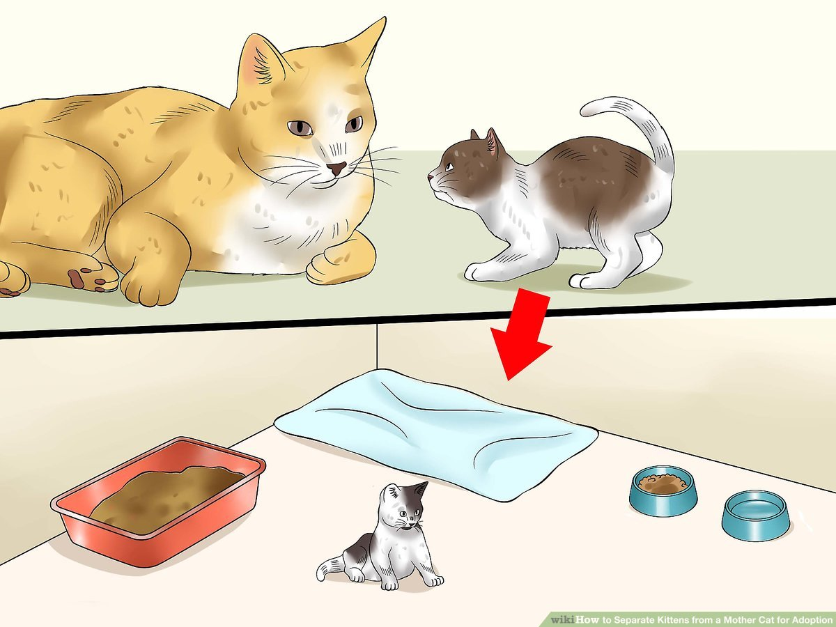 Kittens clipart one cat.  ways to separate