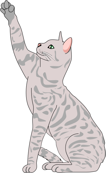 Kitty clipart realistic.  collection of cat
