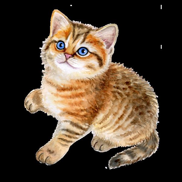 Kitty clipart tabby cat. Kitten cute pinterest