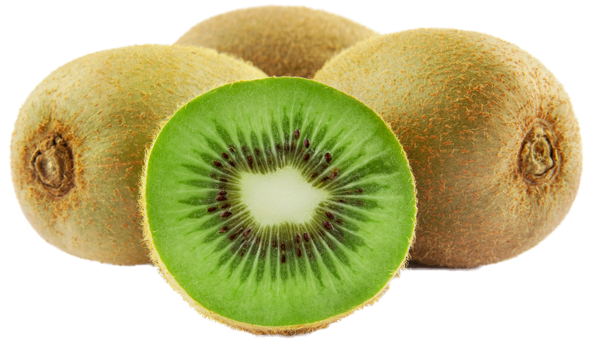 Extremely inspiration at clker. Kiwi clipart clip art
