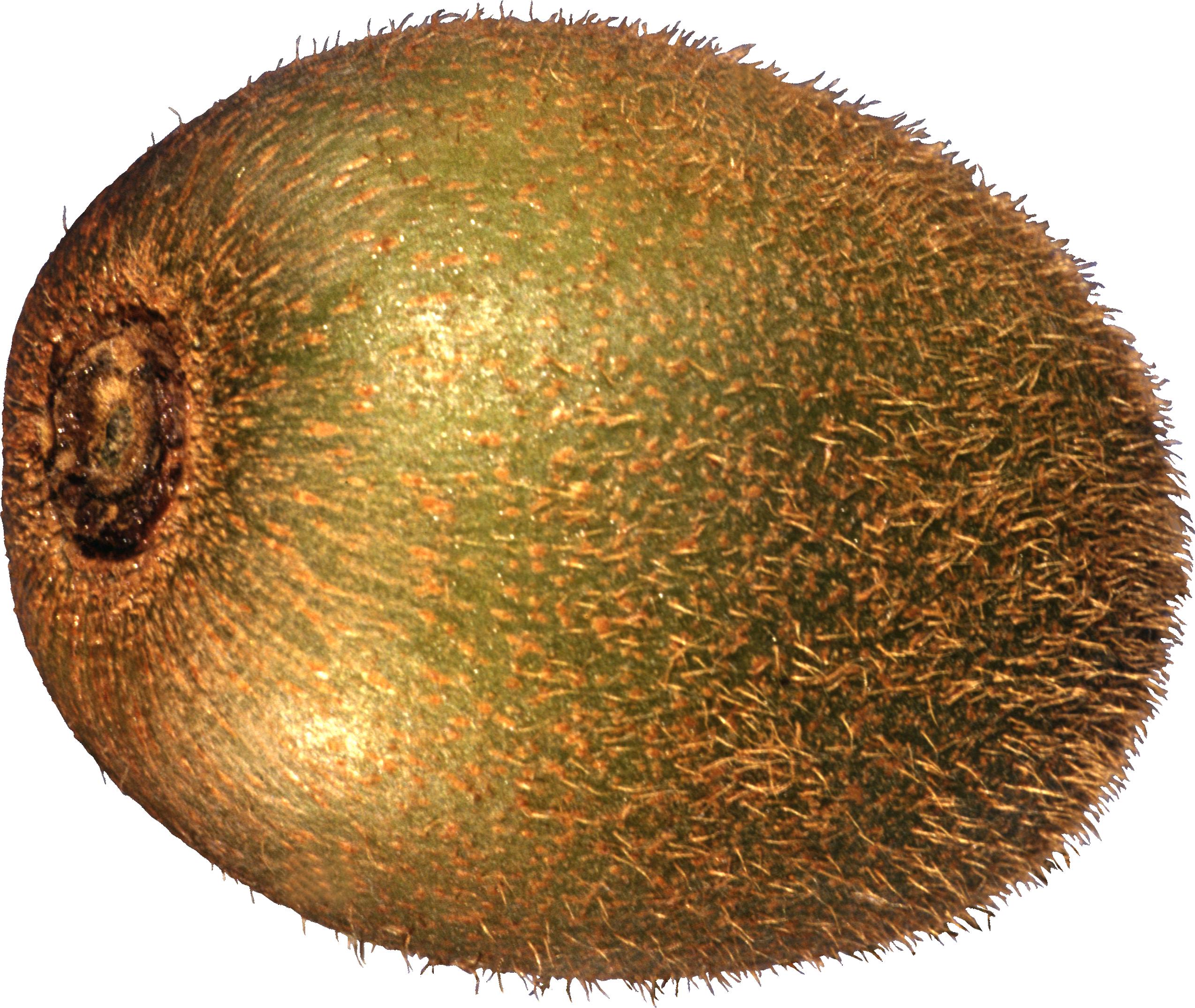Lemons clipart kiwi. Twenty one isolated stock