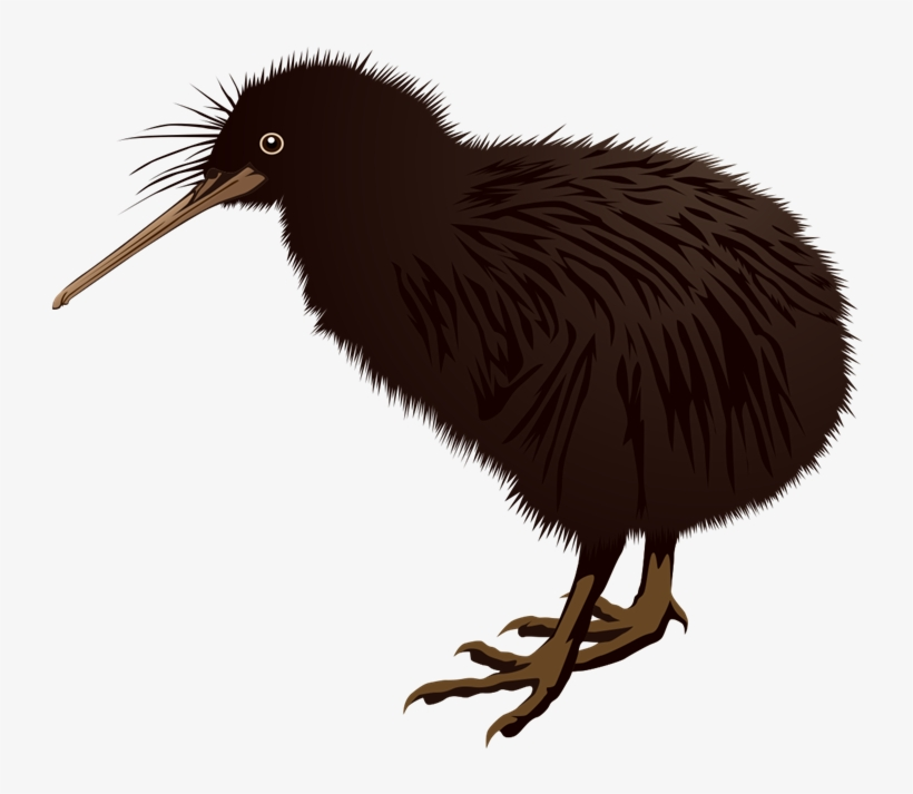 Bird new zealand png. Kiwi clipart kea