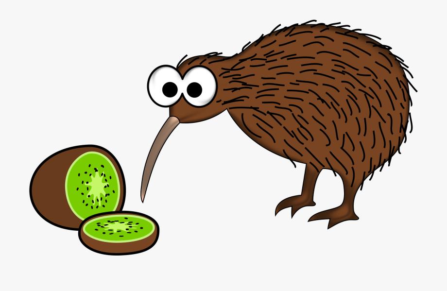 Kiwi clipart kea. New zealand kiwis from