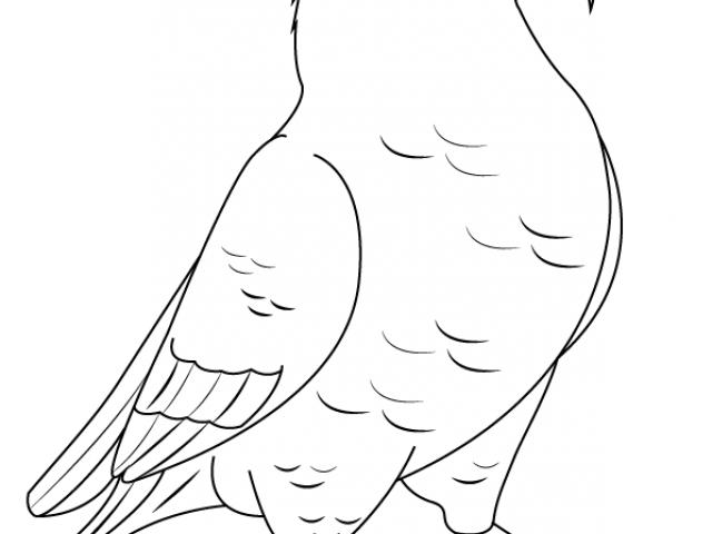 Free bird download clip. Kiwi clipart kea