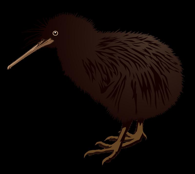 Bird free on dumielauxepices. Kiwi clipart kea
