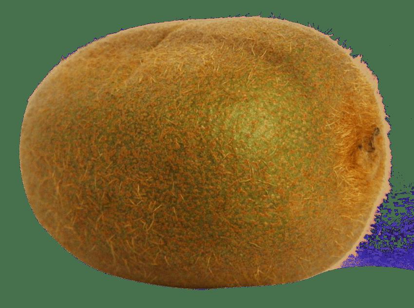 Png file free images. Kiwi clipart kind fruit
