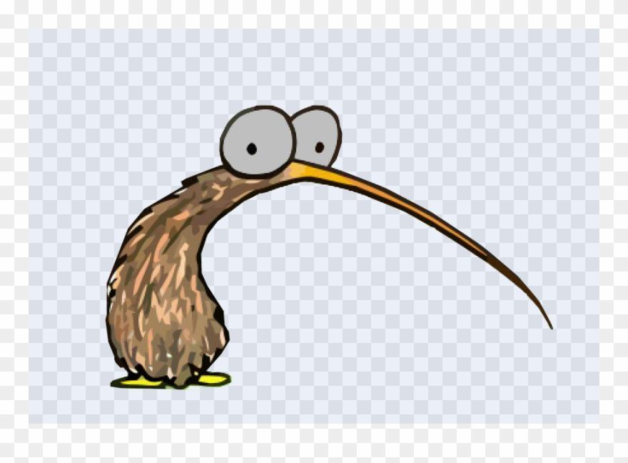Pinclipart . Kiwi clipart kiwi bird