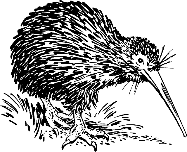 Kiwi clipart kiwi bird. Free image on pixabay