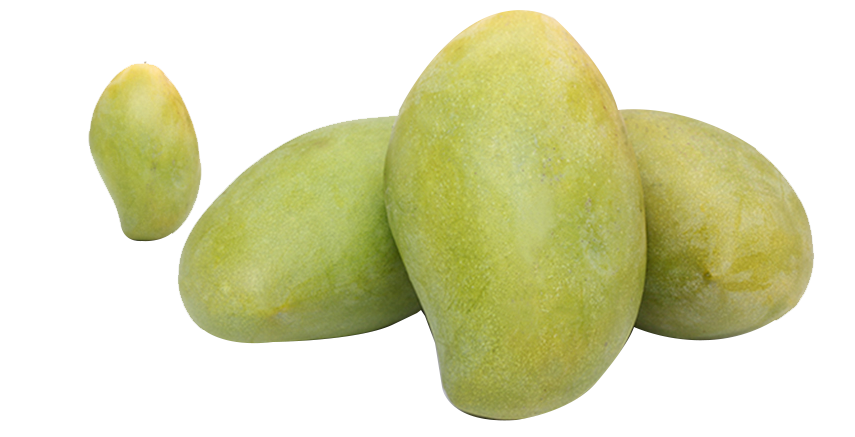 Cyan clip art transprent. Mango clipart green mango