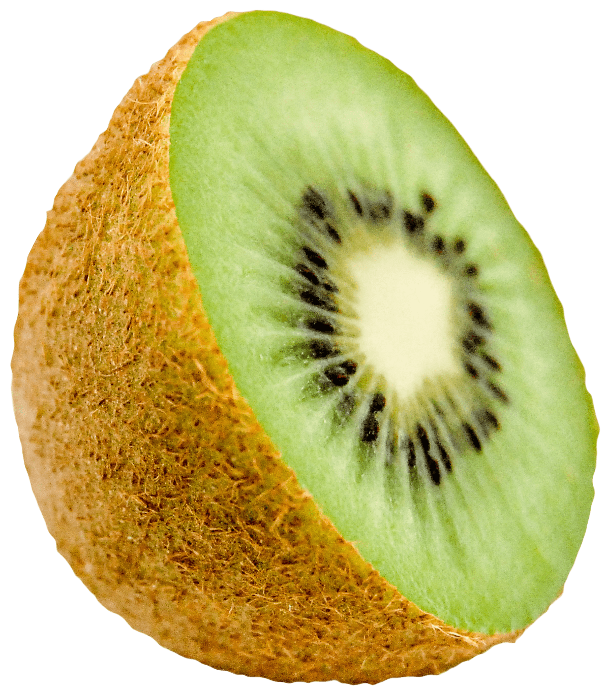 Kiwi clipart one. Png free images toppng