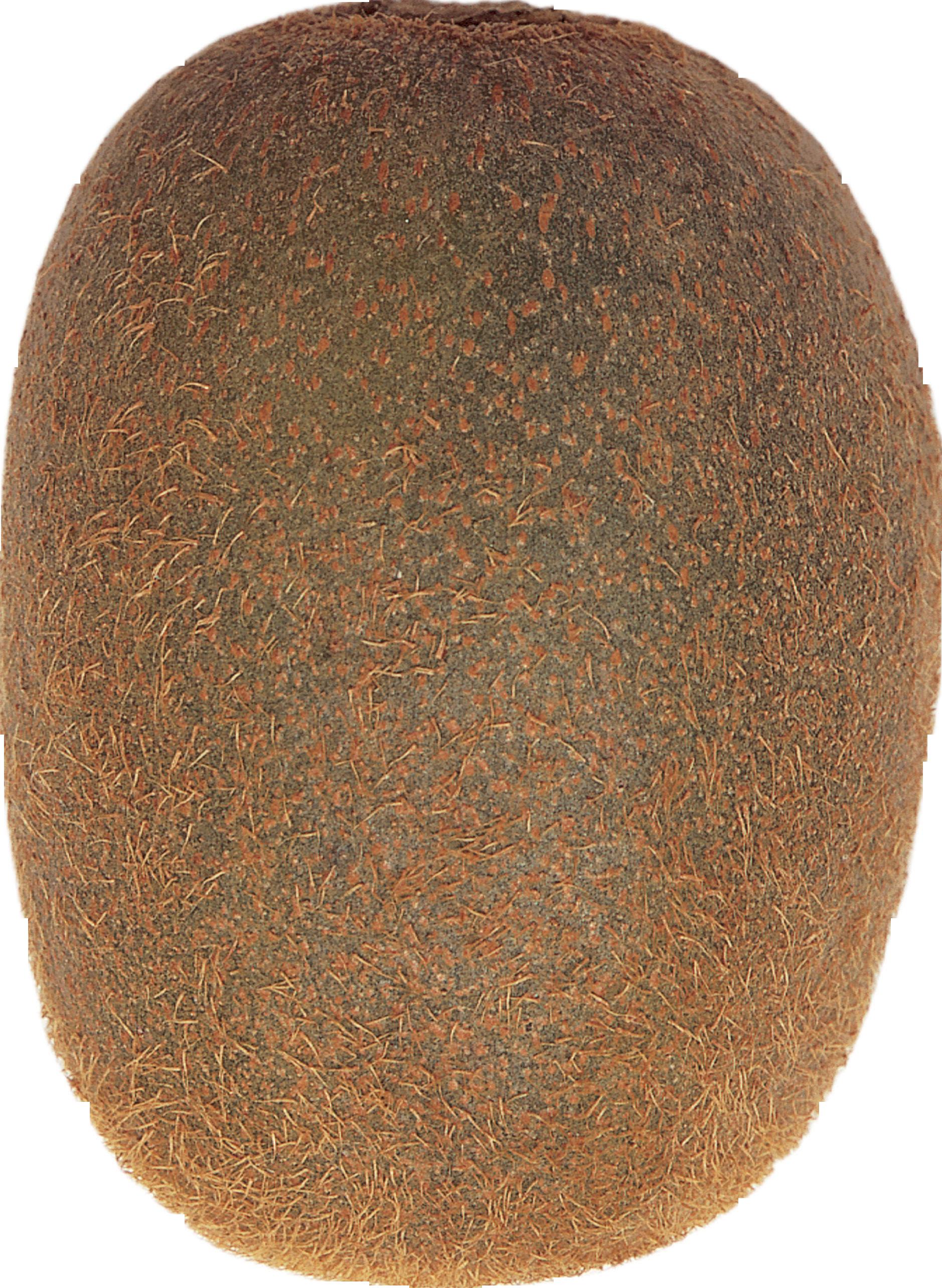 Kiwi clipart transparent background. Png image free fruit