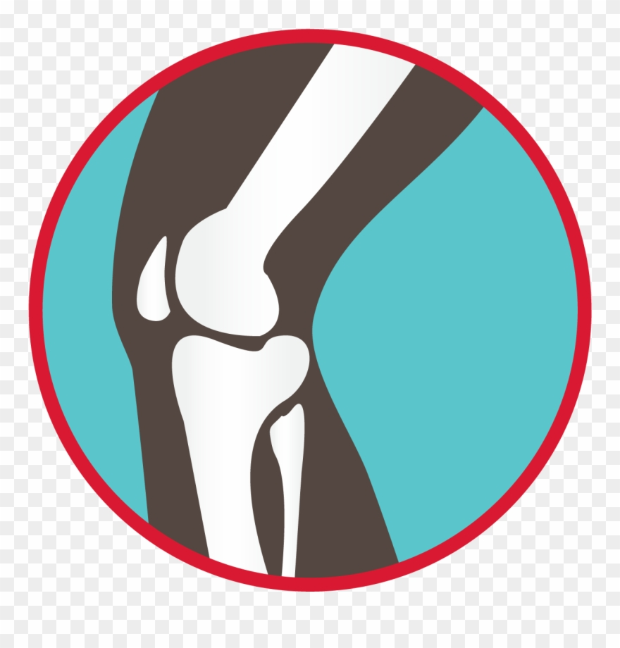 Knee clipart bone joint. Bones of the graphic