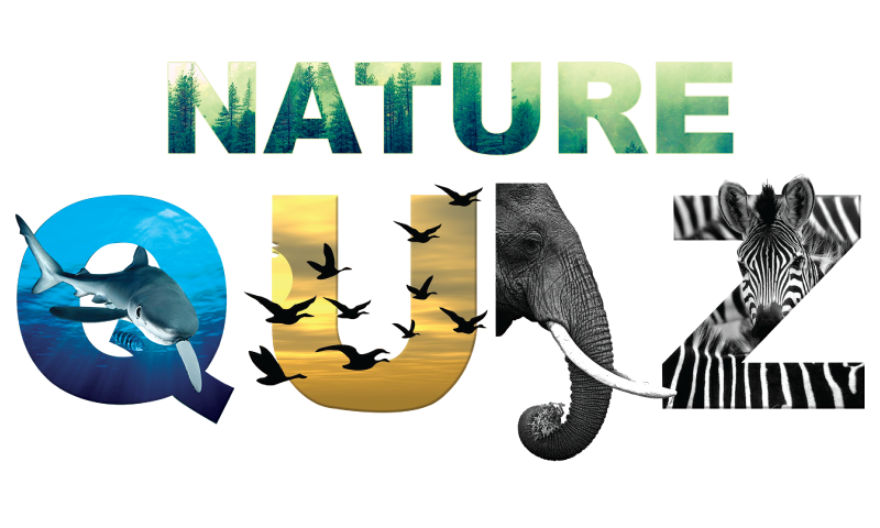 Nature suru s planet. Knowledge clipart quiz competition