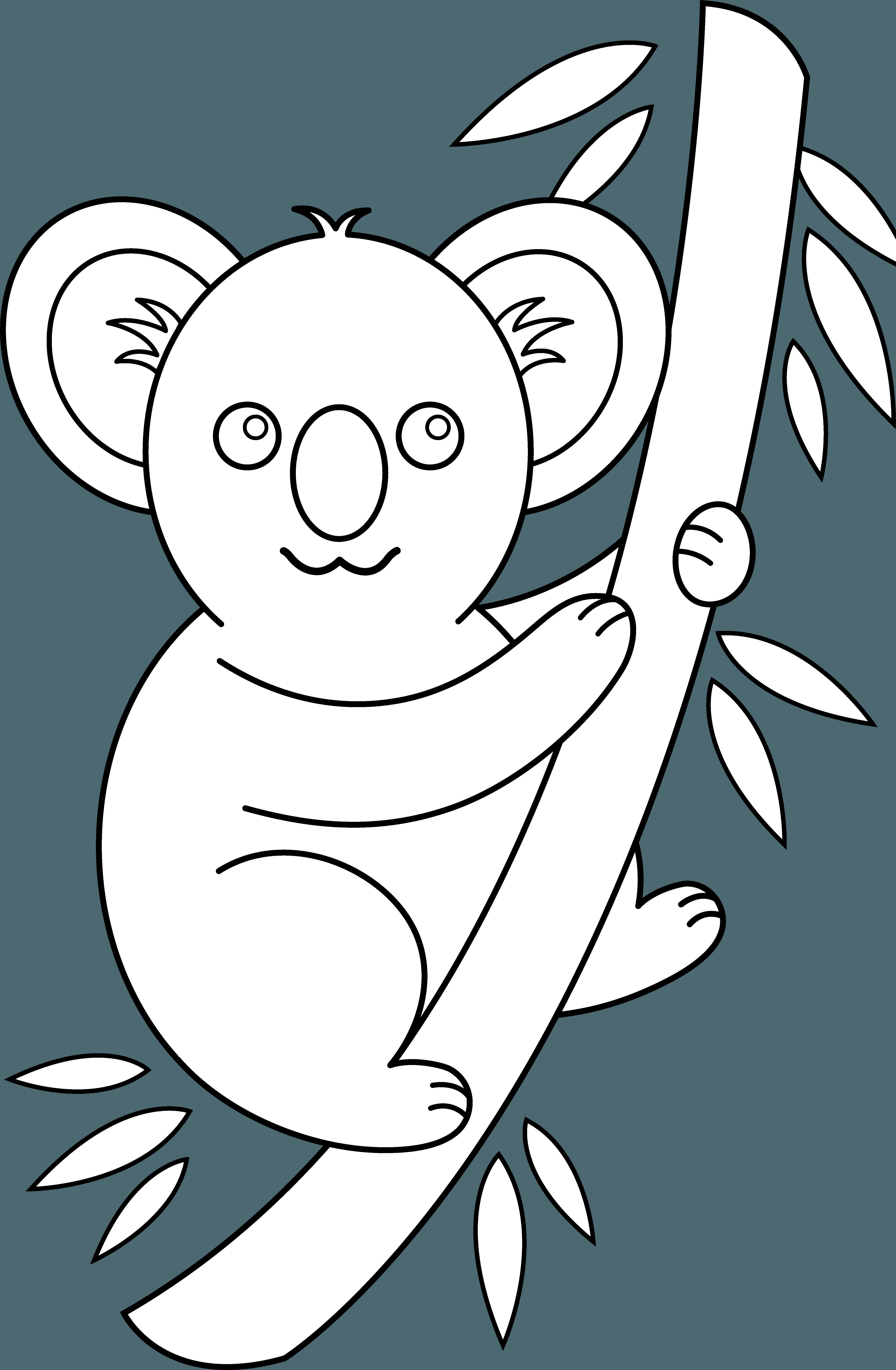 Outline group quoala bear. Koala clipart aussie