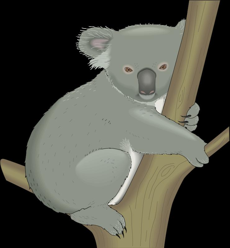 Koala clipart colour. The cliparts d pinterest