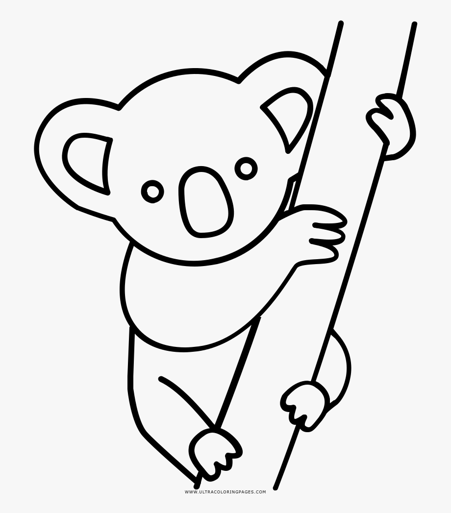 Collection of free drawing. Koala clipart colour