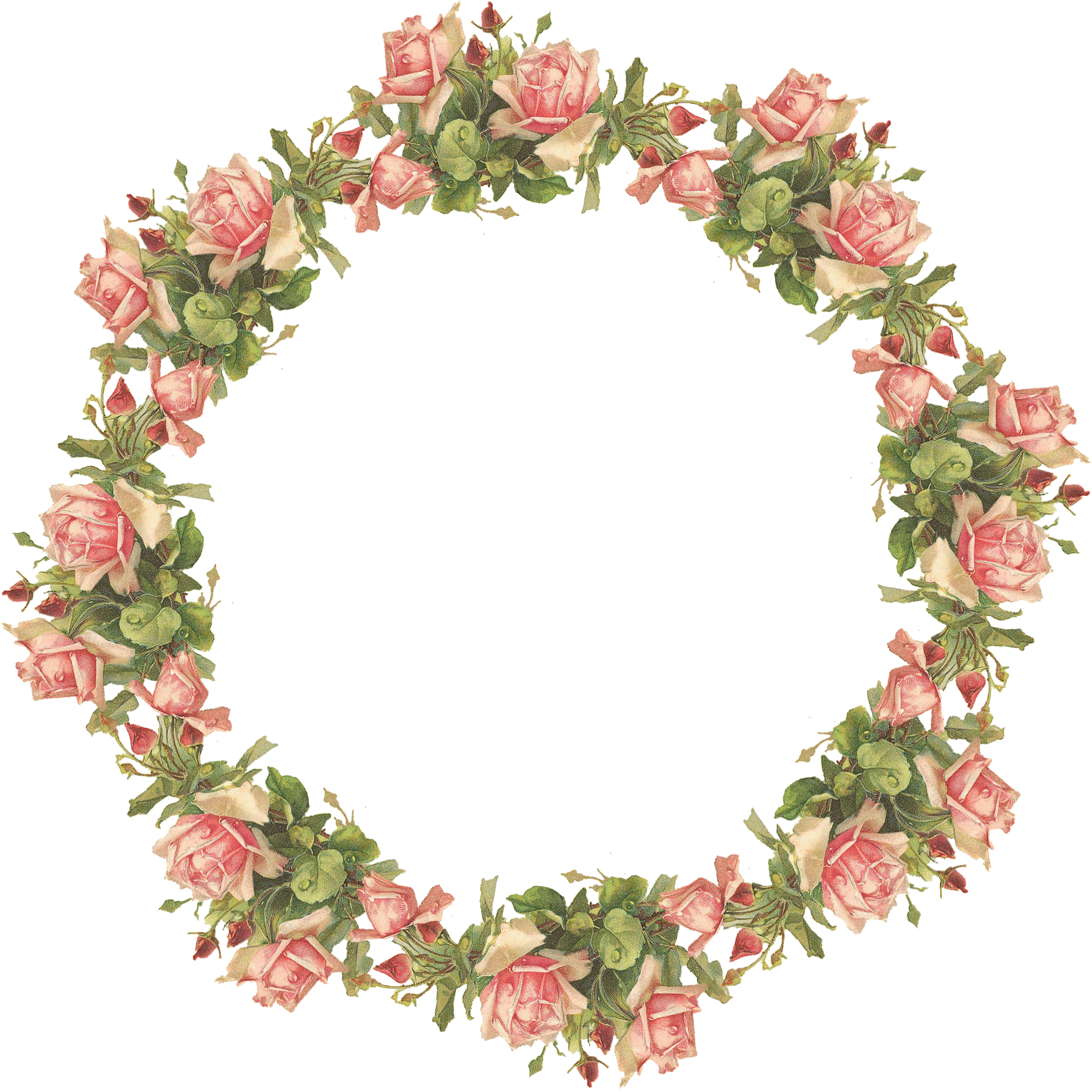 Catherine klein pink roses. Poppy clipart poppy wreath