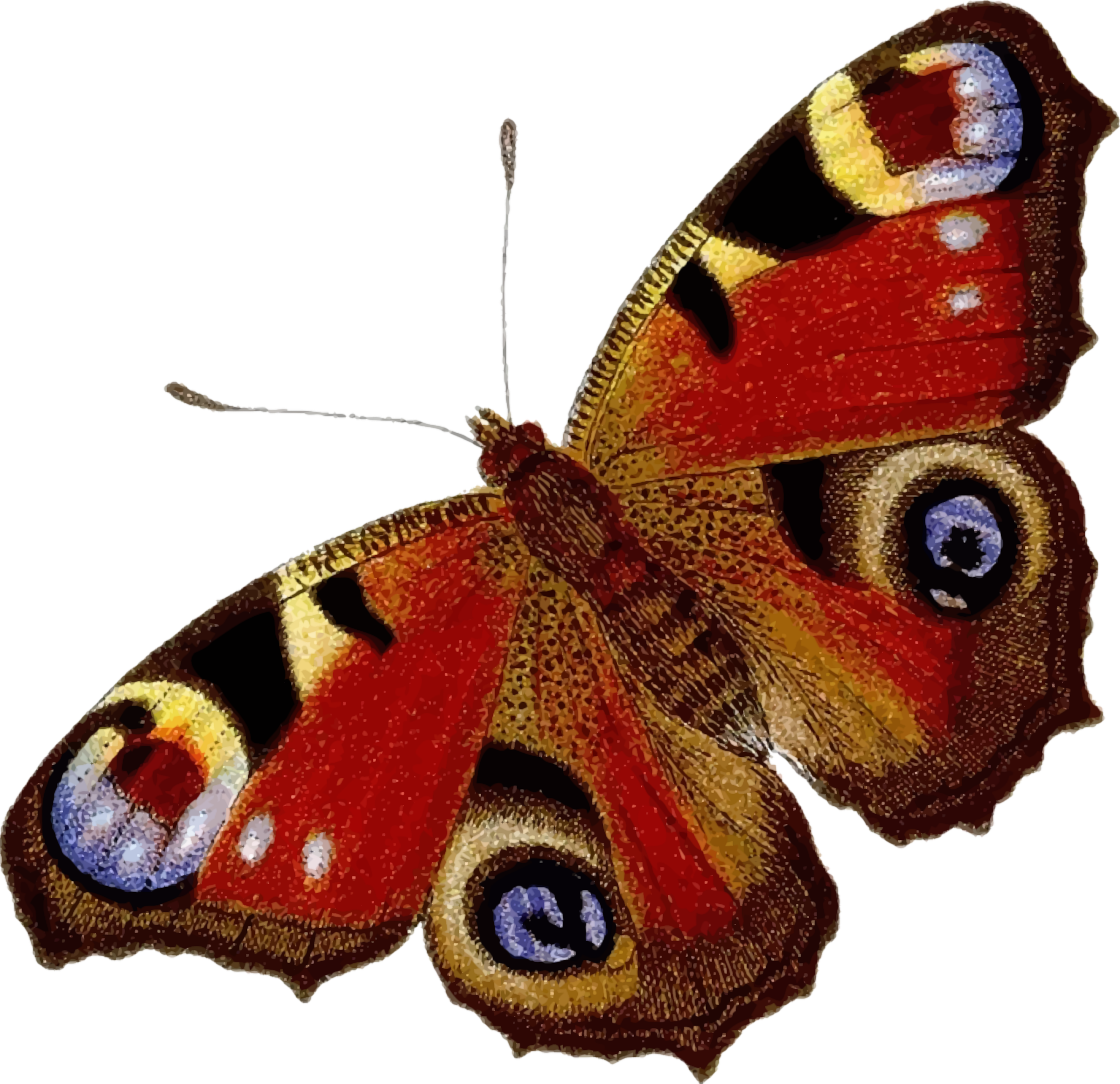 Peacock colour big image. Lady clipart butterfly