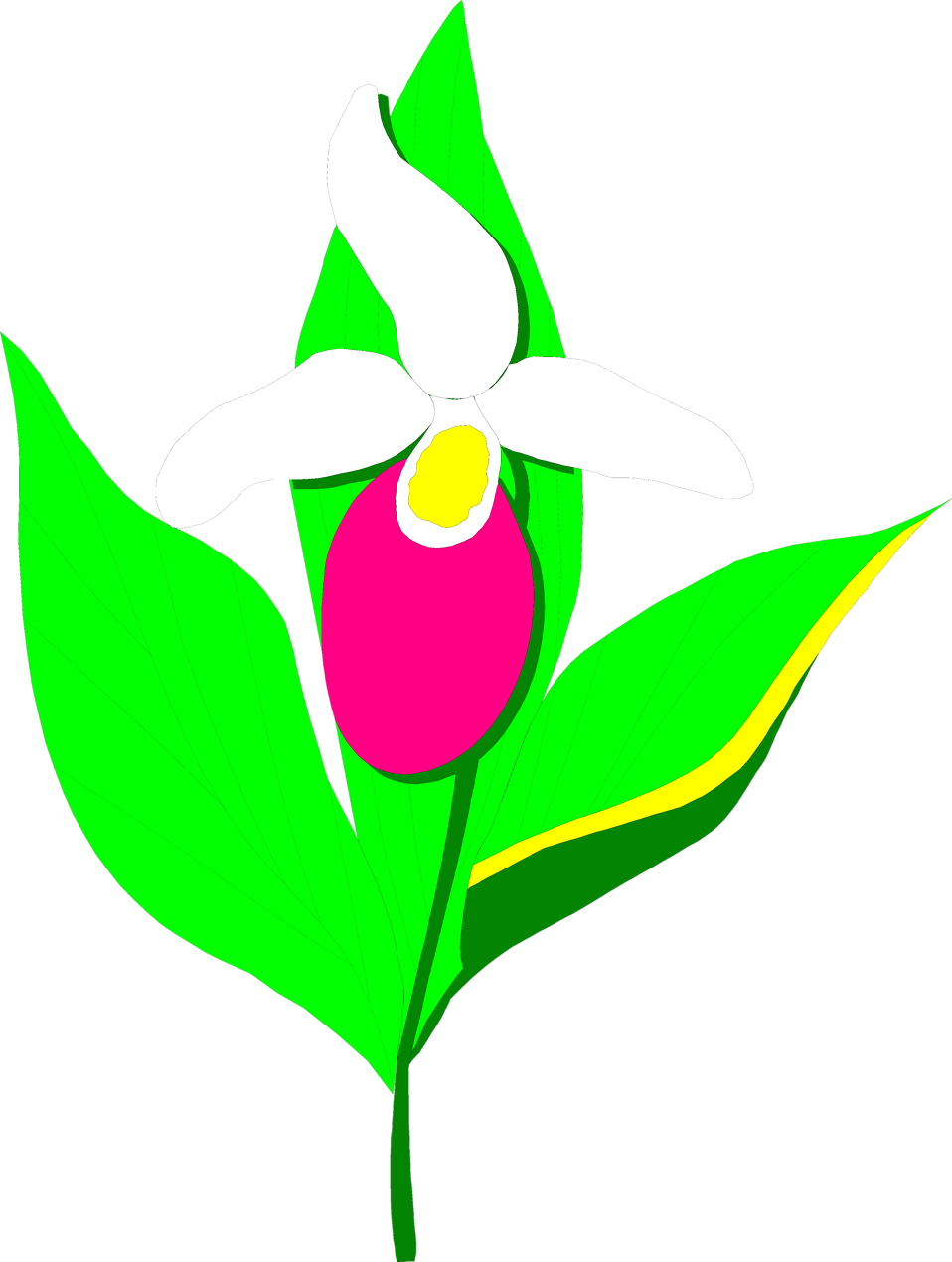 Lady clipart flower. Orchid free stock photo