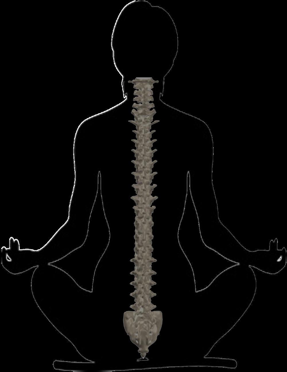The doc yogi . Lady clipart yoga