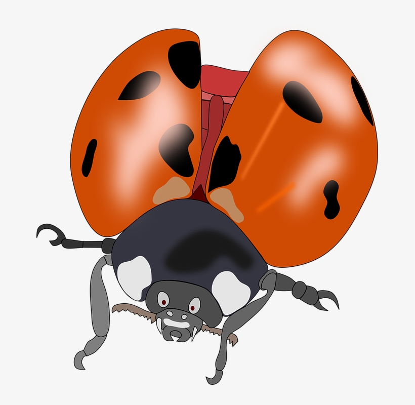 Ladybug clipart 10 orange. Kumbang merah hitam kartun
