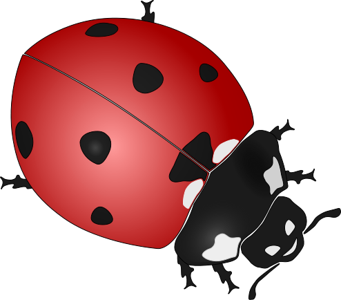 Ladybugs clipart. Everything ladybug the source