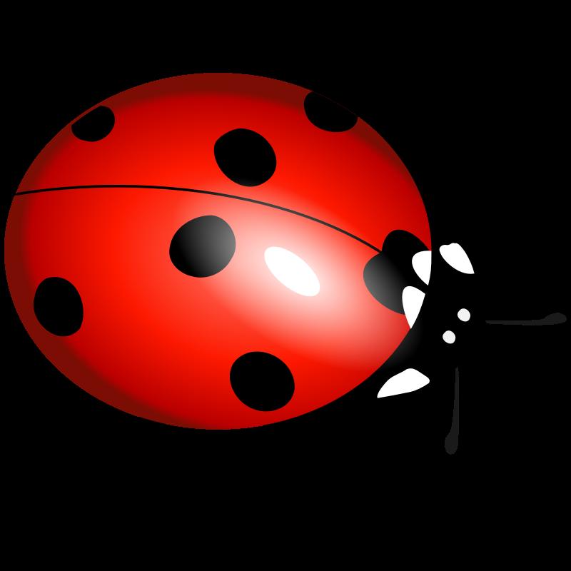 Baby girl cartoon crazywidow. Ladybug clipart animated