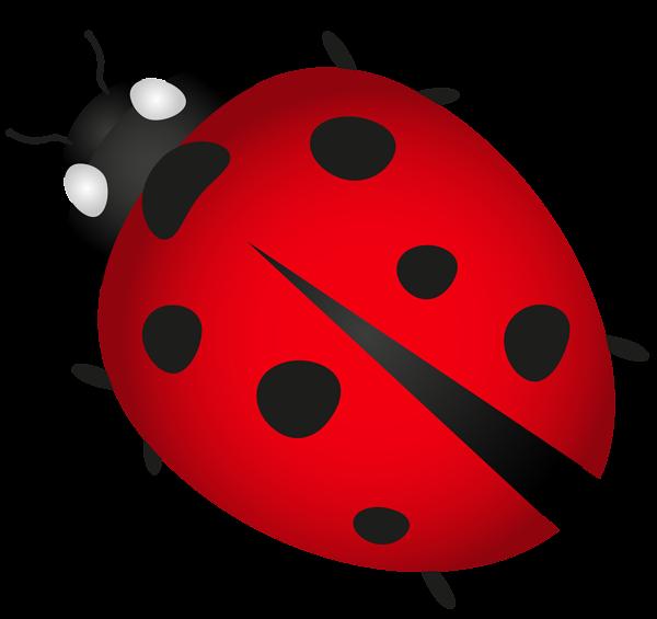Ladybug clipart bettle. Ladybird beetle clip art