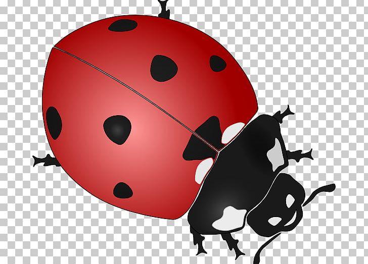 Beetle ladybird drawing black. Ladybug clipart bettle
