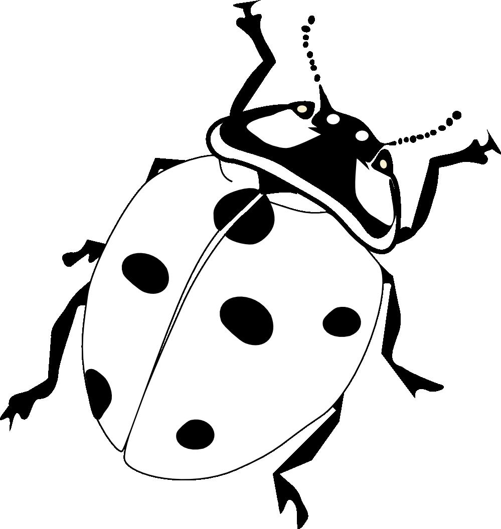 cool ladybug clip. Ladybugs clipart line art