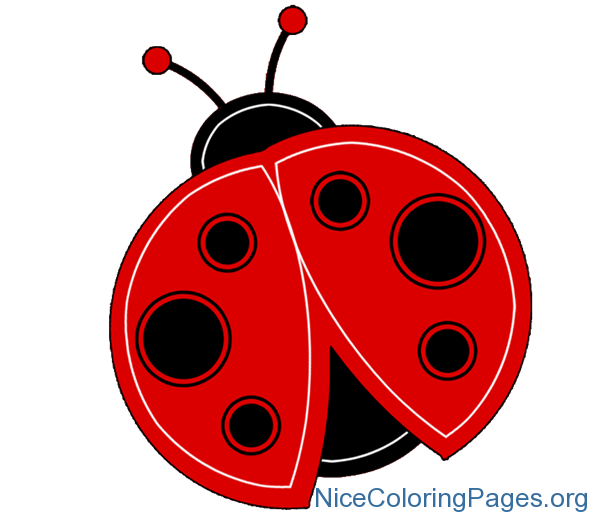 Ladybug clipart colouring. Nice coloring pages for