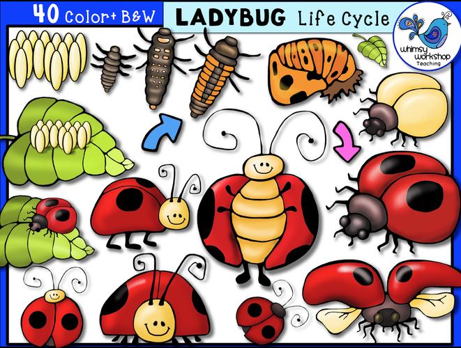 Ladybug clipart cycle. Life whimsy workshop teaching