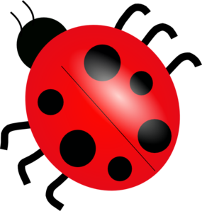 Top view png svg. Ladybug clipart eye