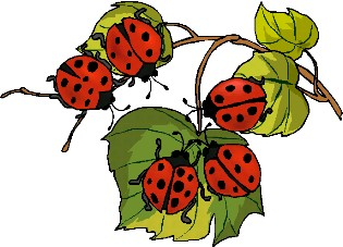 Ladybugs clipart five. Home