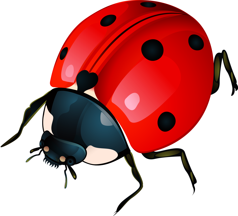 Ladybug images free download. Ladybugs clipart gambar