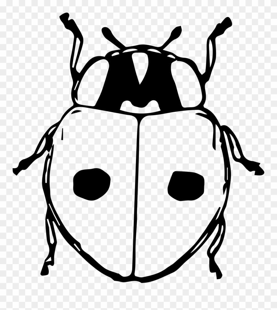 Ladybugs clipart gambar. Ladybird beetle black and