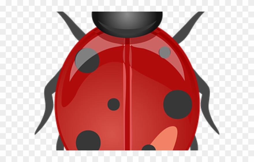 Ladybugs clipart garden creature. Lady beetle png