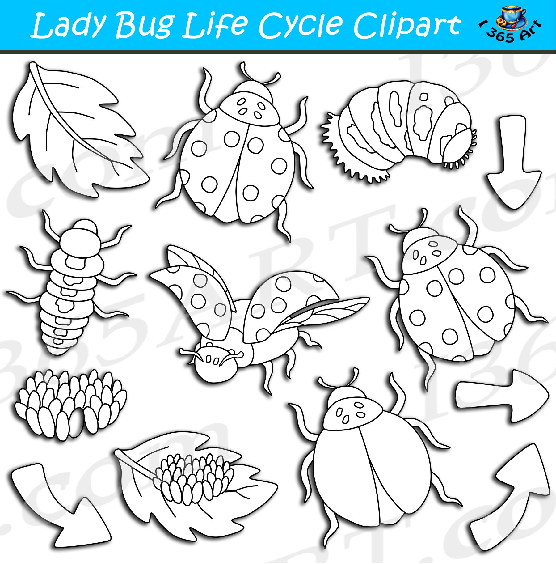 Life cycle bundle . Ladybug clipart lifecycle